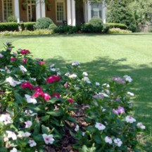 Flower Bed Maintenance in North Atlanta, Georgia